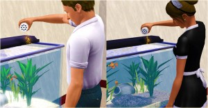 Who feeds the fish when the maid isn't near?