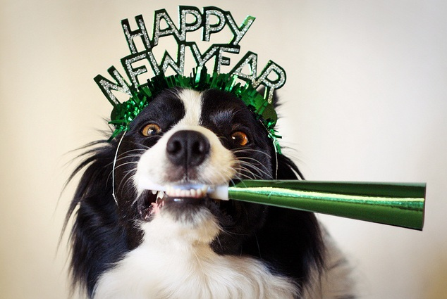 Happy New Year from all of us at Snug At Home Pet Sitting!