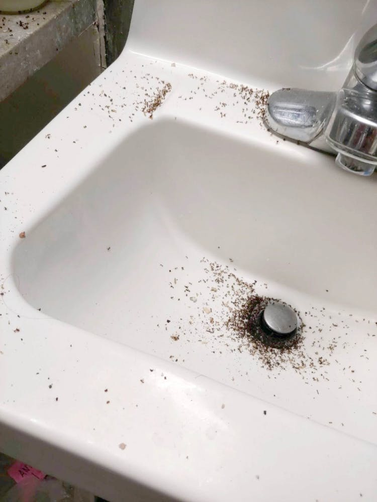 ants rain down from