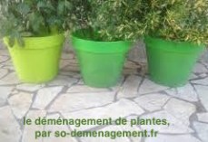 déménagement de vegetaux