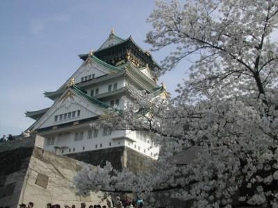 大阪城公園 お花見