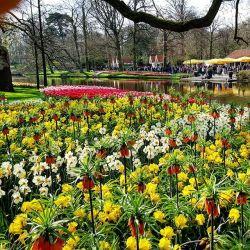 Tulpen, Keukenhof, Park, Garten