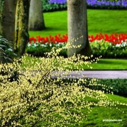 Frühling, Park, Blume