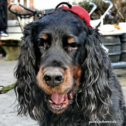 lustiger Hund mit Hütchen