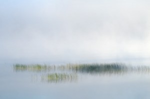 """$50 Prize Ray Helmke """"Reed, Grass and Mist"""""""
