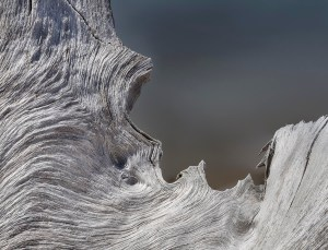 "12. Susan C. Larkin Driftwood I: Block Island, Archival pigment print 16"" x 20"" (horizontal - includes frame) Retail value: $130"