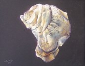 Oyster #4; Westkeag River Aphrodite, ME