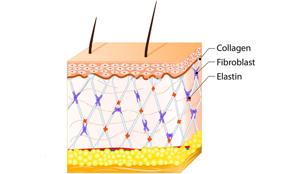 Collagen-diagram_2