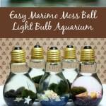 Easy Diy Light Bulb Aquarium