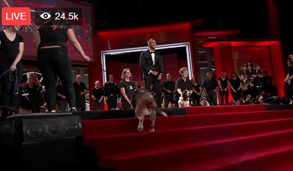 dog-emmys