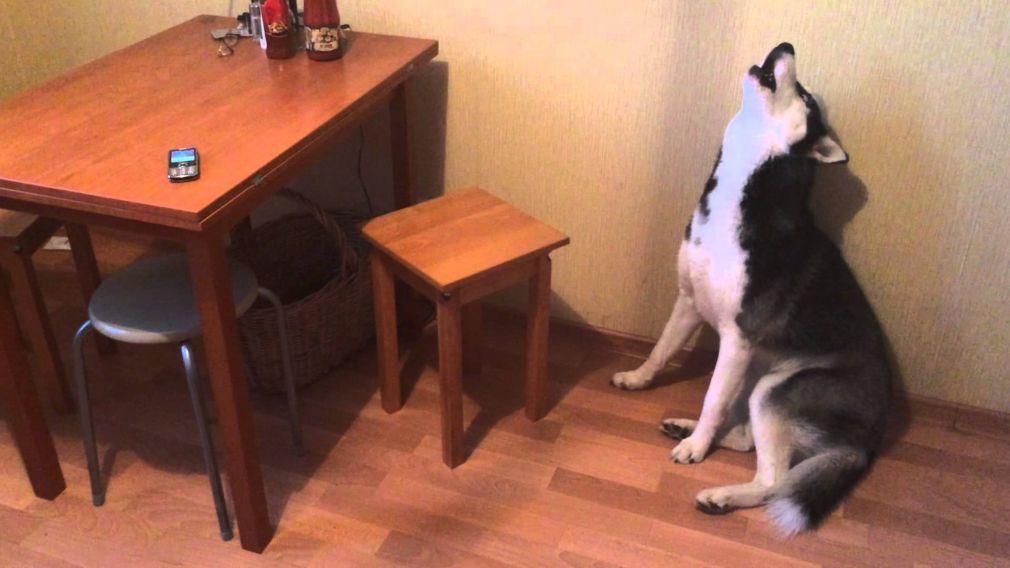 Marcas de cachorro em casa