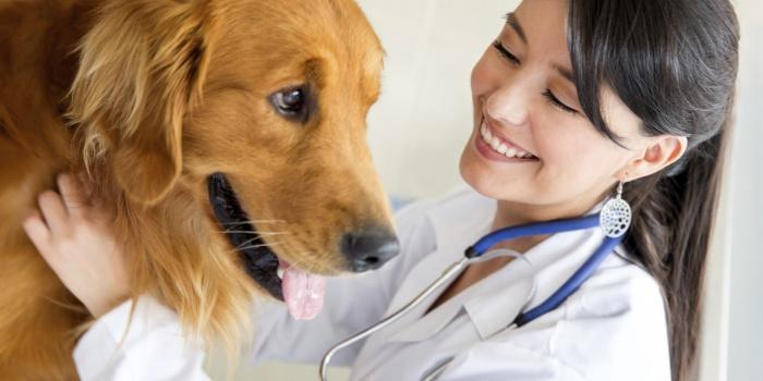 Профилактика собачьего ревматизма