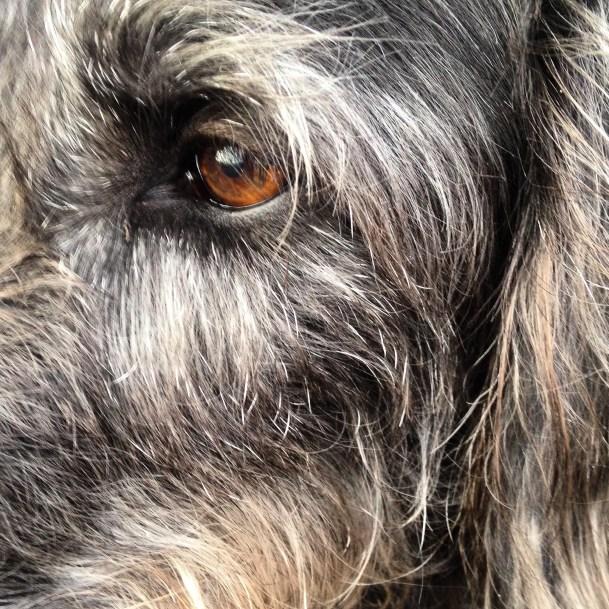 Day 28: Sacha the dog.