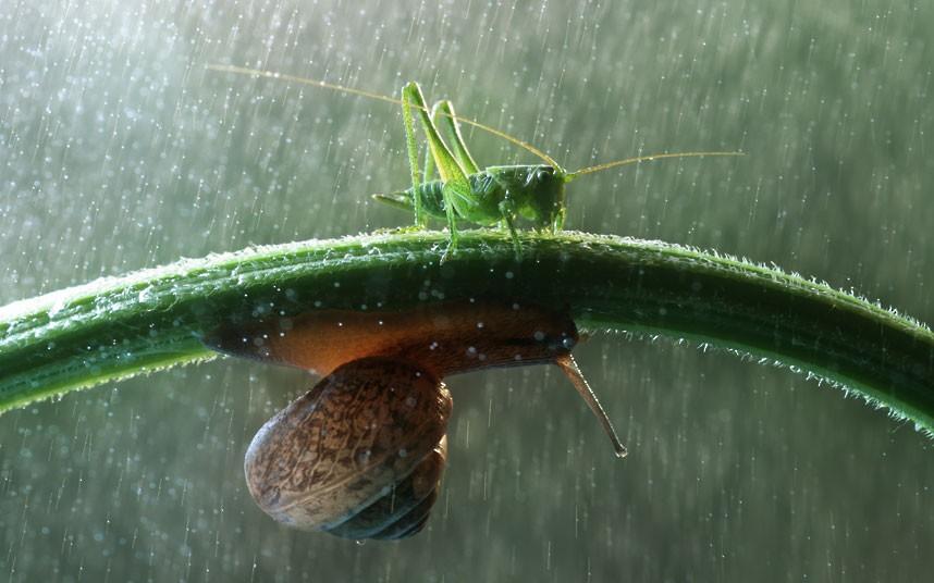 snail-grasshopper_2290145k