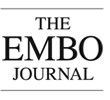The EMBO Journal logo
