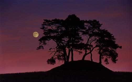 Entonces llegas tu, Luna hermosa, trayendo mágica luz a mis horas de desvelo