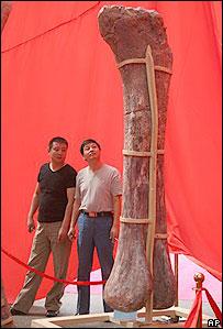 Hueso expuesto en museo de Henan.