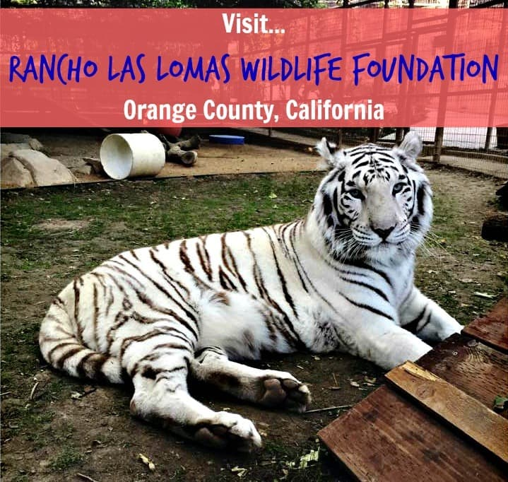 A Field Trip To The Rancho Las Lomas Wildlife Foundation