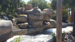 A diligent cougar perched on top of boulders ready to pounce on rafters below