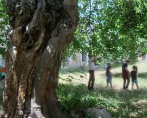 La cueillette des mûres dans le jardin du monastère d'Amaras à l'ombre rafraîchissante des arbres séculaires.