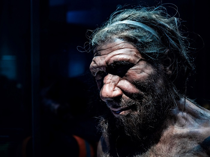 A replica of a male Neanderthal at London's Natural History Museum.