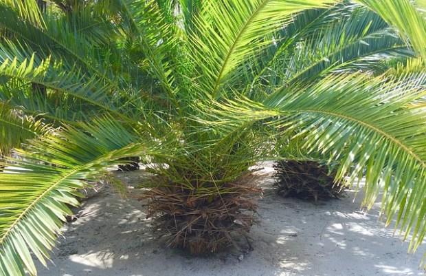 palm-1274006_640
