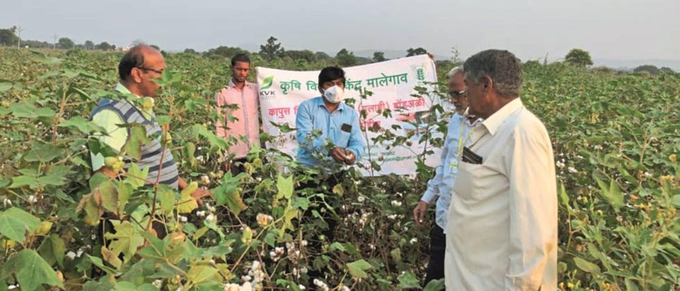 Guidance to farmers on Bond Ali from Malegaon 'KVK'