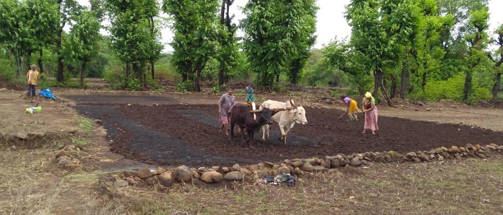 Sowing is possible on over 2 lakh hectares in Buldana district