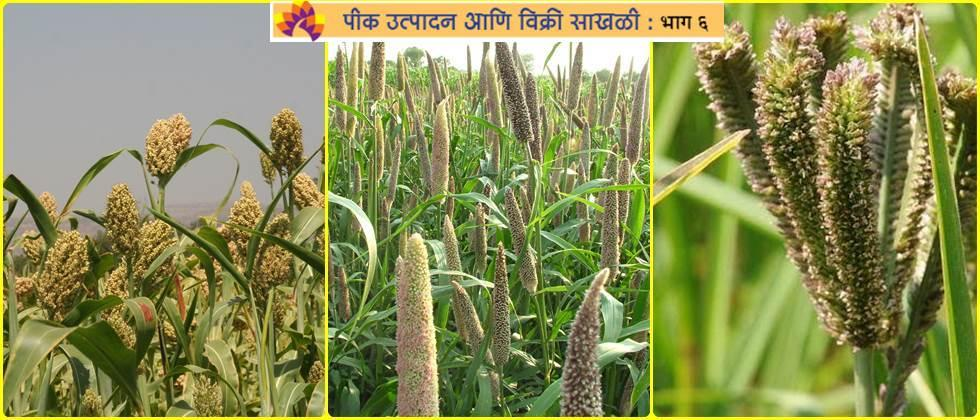 Opportunity to process in cereal crops