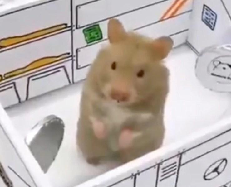 hamster rocket