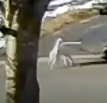 Dog unleashes herself to get help after owner collapsed