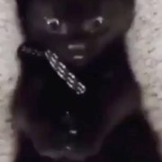 Kitten discovers they have four paws