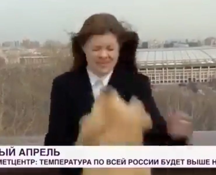 Dog steals mic out of reporters hands on live TV