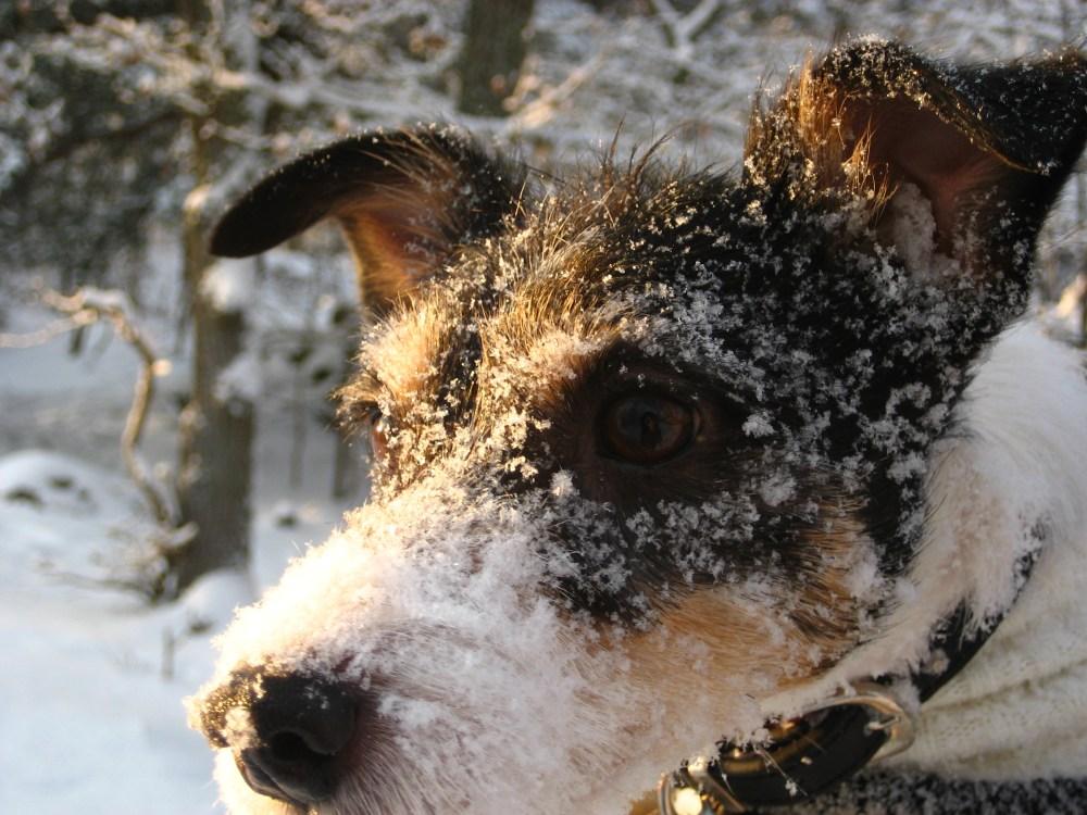 Huset fullt av hundar - Familjens rätt till liv
