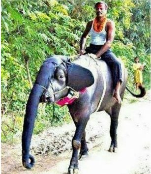 Jugaad for elephant ride