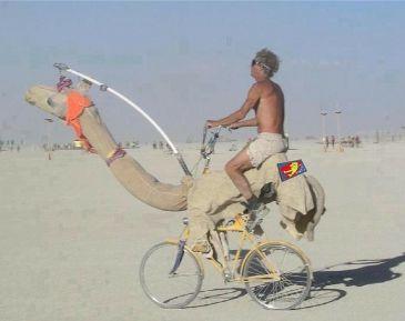 A Camel ride Jugaad