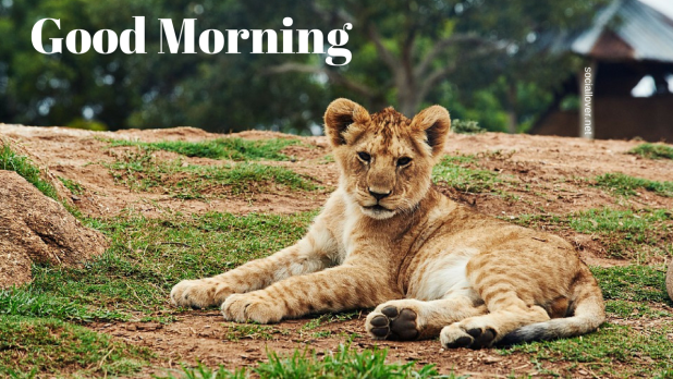 cub good morning hd| Animal images