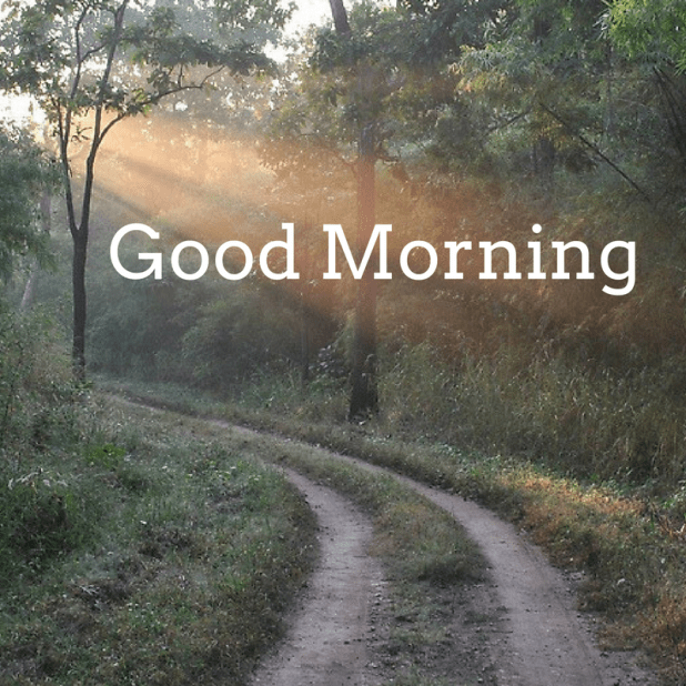 Images of forest good morning