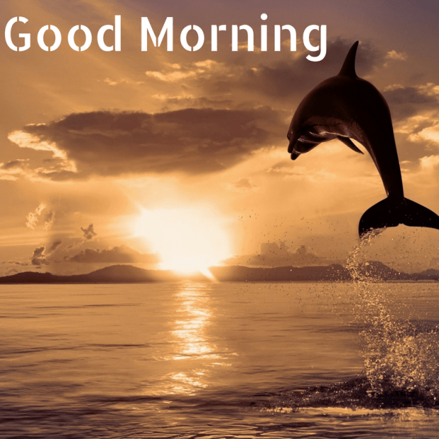 good morning dolphin images