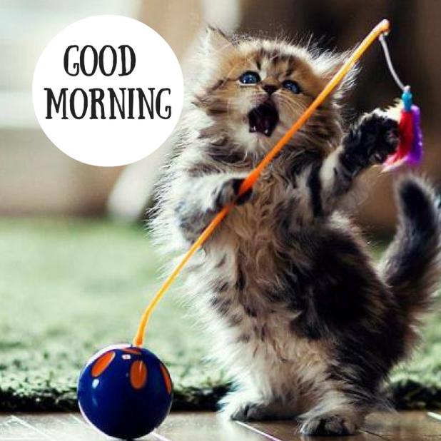 Cat saying Good Morning images HD