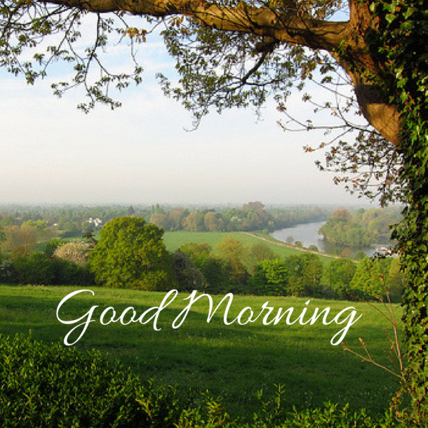 cute nature good morning hd tree image