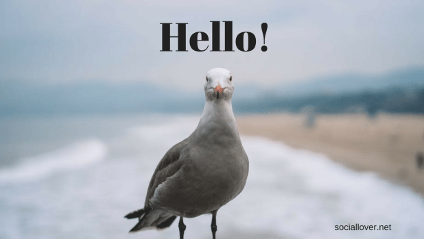 hi images for facebook|Pigeon picture