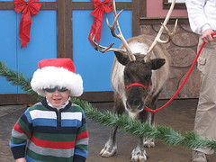 Granta Claus and his reindeer
