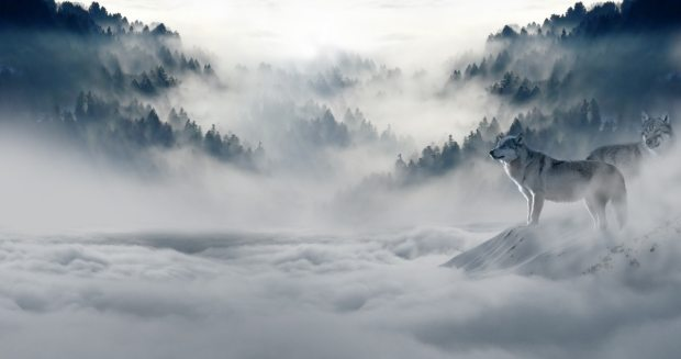 wolf-wolves-snow-wolf-landscape-89773.jpeg
