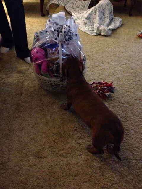 Lila Checking Out Her Basket