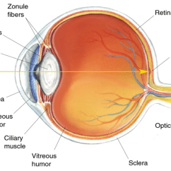 Eye Lens Replacement Diagram Landscape It Researchers Successfully Use Grown Cornea Cells To Cure