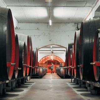 Penfolds_Magill_Estate_Cellar_Door_Barrels_St_Henri