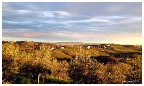brda_wine_region-Slovenia