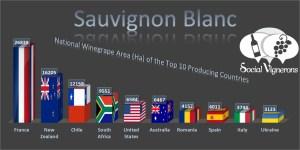 Sauvignon Blanc Top 10 Countries World Vineyard Surface Area Wine Social Vignerons