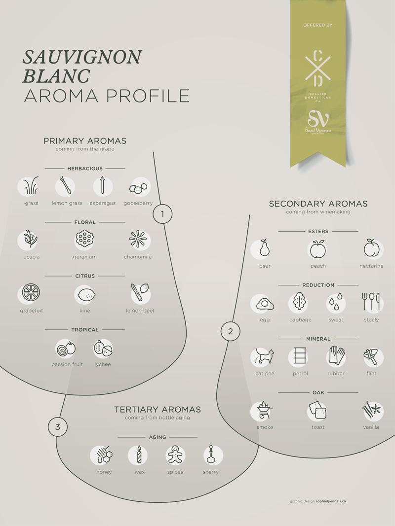 Sauvignon Blanc grape variety wine aroma profile flavors fruit spices Social Vignerons